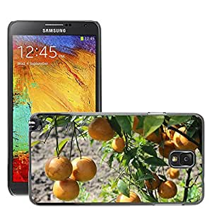 Hot Style Cell Phone PC Hard Case Cover // M00308244 Orange Garden Patiala Natural Green // Samsung Galaxy Note 3 III N9000 N9002 N9005