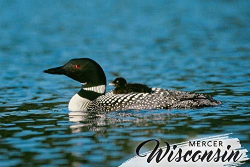 Wisconsin Chick - Mercer, Wisconsin - Loon and Chick (16x24 SIGNED Print Master Giclee Print w/Certificate of Authenticity - Wall Decor Travel Poster)