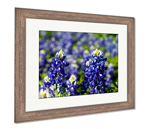 Ashley Framed Prints Beautiful Texas Bluebonnets, Wall Art Home Decoration, Color, 26x30 (Frame Size), Rustic Barn Wood Frame, AG6326278