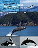 2020 Weekly and Monthly Planner: Whales Collage - Monthly Calendar with U.S./UK/ Canadian/Christian/Jewish/Muslim Holidays- Calendar in Review/Notes 8 x 10 in.- Marine Life Sea Creatures Ocean