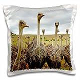 3dRose Ostrich Wild Australia Animal Pillow Case, 16 x 16''