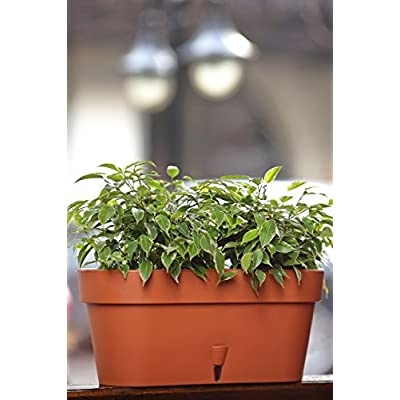 Santino Self Watering Window Box Planter Latina 15.6 Inch, Graphite, Indoor/Outdoor, Windowsill/Oblong Shape Plastic Planter with Bottom Watering and Water Level Indicator : Garden & Outdoor