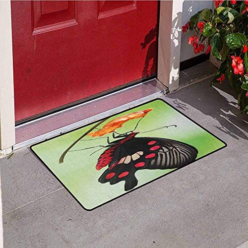 GloriaJohnson Swallowtail Butterfly Commercial Grade Entrance mat Amazing Moment Coming Out of Cocoon Chrysalis Transformation for entrances garages patios W29.5 x L39.4 Inch Red Black Green