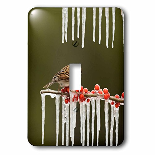 3dRose Danita Delimont - Songbirds - Chipping Sparrow perched on icy branch, Hill Country, Texas - Light Switch Covers - single toggle switch (lsp_279521_1)