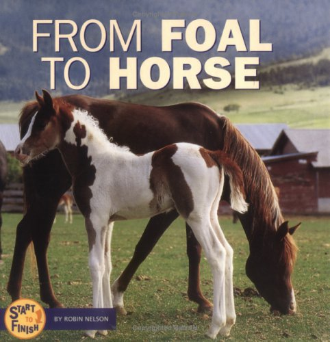 From Foal to Horse (Start to Finish) ebook