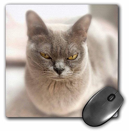 3D Rose Closeup Of A Blue American Burmese Cat. Matte Finish Mouse Pad - 8 x 8 - (Burmese Rose)
