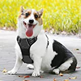 Dog Harness, No Pull Pet Harness Adjustable Outdoor Pet Vest 3M Reflective Oxford Compound Material Vest for Dogs Easy Walk Control for Small Medium Large Dogs, EackrolaBlack,M For Sale