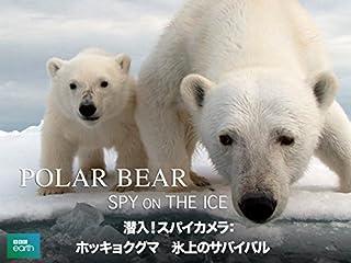 潜入!スパイカメラ〜ホッキョクグマ 氷上のサバイバル