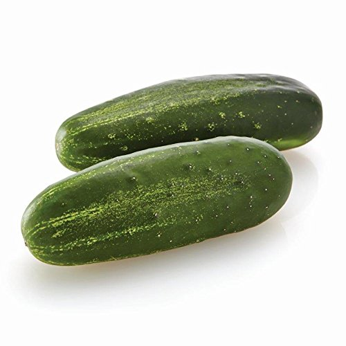 Cucumber Citadel F1 Seeds - Vegetable Seeds Package - Approx. 50 Seed Package ()
