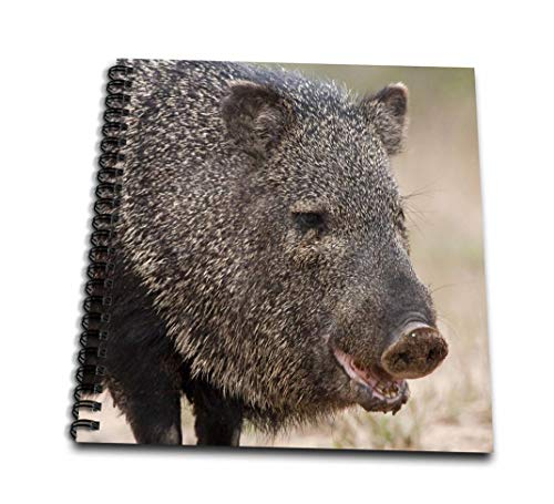 Danita Delimont–Wildlife–Santa Clara Ranch Rio Grande Valley Javelina Wildlife–us44fzu0067–Frank Zurey–Drawing Book 4 x 4` db_94457_3