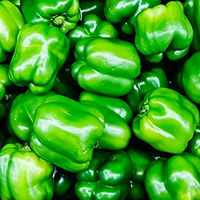 North Star Hybrid - Sweet Pepper Garden Seeds - Non-GMO - Green Bell Peppers Seed - Vegetable Gardening Seed