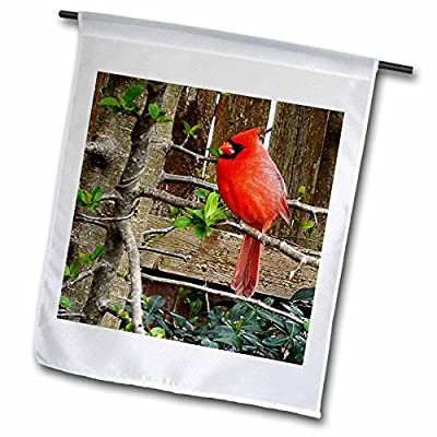 3dRose Renderly Yours Birds - Bright Red Cardinal By Wooden Fence - Flags