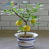 50 Pcs / Bag, Bergamot Seeds, Family Potted Plants,gold Buddha Hand, Purify Air,seeds Yellow Gold Buddha Hand