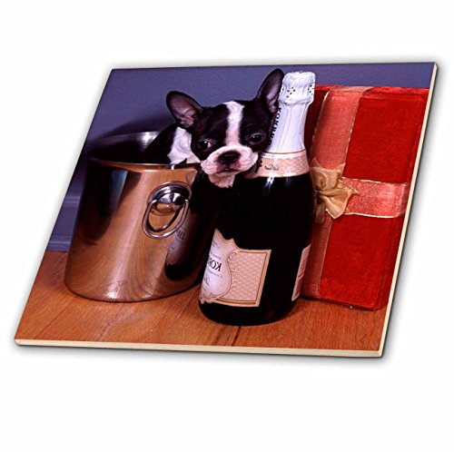 3dRose ct_3113_6 Boston Terrier Satine Glass Tile, 6-Inch