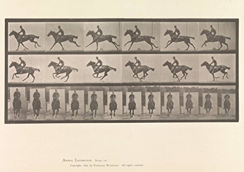 Historic Photograph | Eadweard Muybridge | Horse and Rider Galloping | Vintage Wall Art | 11in x 14in