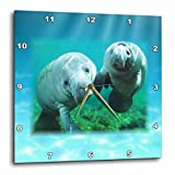 3dRose dpp_39647_2 2 Manatees Looking at You-Wall Clock, 13 by 13-Inch For Sale