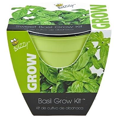 Buzzy Sweet Basil Grow Kit, 4-In. Plastic Pot Non-GMO Garden Starter Set ~ USA SELLER ~ FAST SHIPPING ~