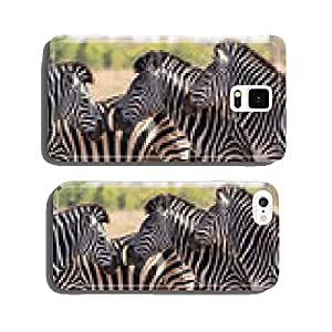 Zebra herd in colour photo with heads together cell phone cover case iPhone6 Plus