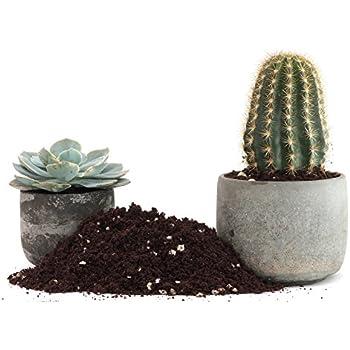Amazon Cactus Succulent Plant Soil Mix Home Garden Potting