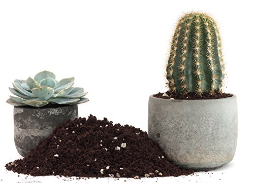 Cactus Succulent Plant Soil Mix - Home Garden Potting Soil for Growing Cacti - Water Saving with Coco Coir - Proper Aeration & Balanced Nutrition Expands to 8 Quarts