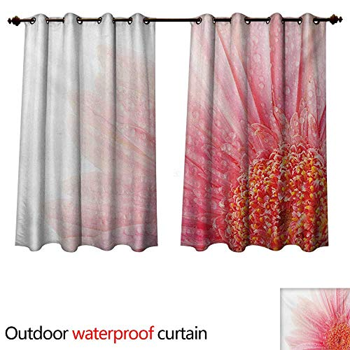 Daisy Balloons Gerbera (WilliamsDecor Pink and White Outdoor Curtain for Patio Close Up Picture of a Gerbera Daisy with Water Drops on Its Petals W55 x L45(140cm x 115cm))