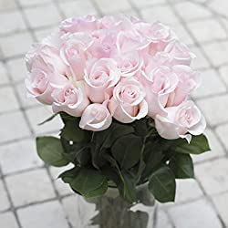 Greenchoice - 50 Fresh cut Light Pink Roses | 20 '' long stem | No vase, for Valentine's Day