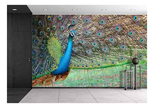 wall26 - Portrait of Beautiful Peacock with Feathers Out - Removable Wall Mural | Self-Adhesive Large Wallpaper - 100x144 inches