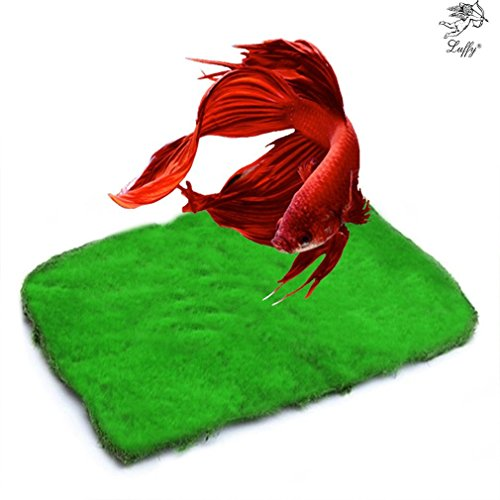 (Betta Carpet by Luffy - Lush Green Landscape in Aquarium - Natural Habitat for Betta - Create a Moss Carpet - Thrive with Minimal Care)