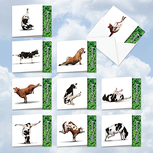 BOVINE NIRVANA: 10 Assorted 'Square-Top' Blank, All Occasions Note Cards Featuring Fun and Flexible Cows Perfecting Various Yoga Poses with Envelopes. MQ6545OCB-B1x10 - Cow Note
