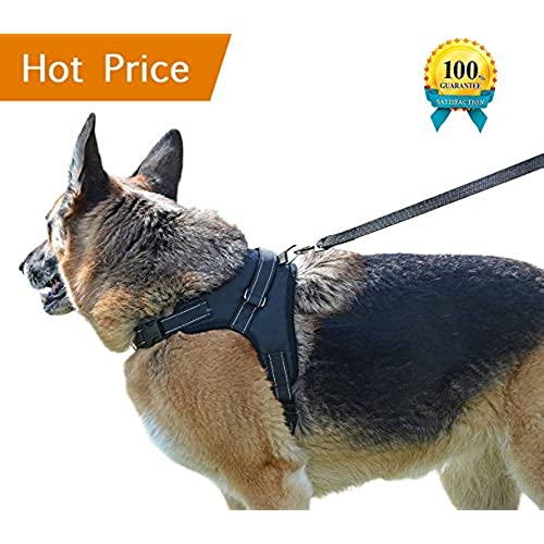 Dog Harness for Labrador: Amazon.com