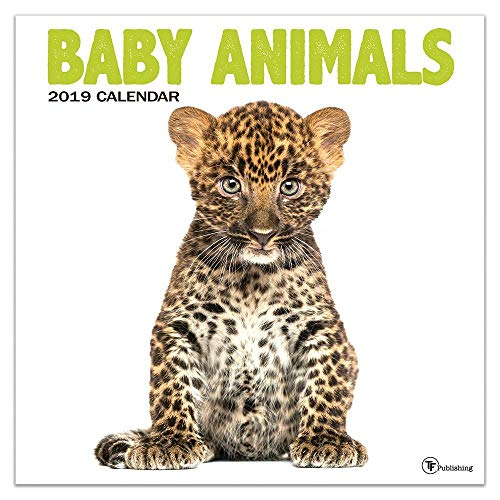 2019 Baby Animals Wall Calendar, Baby Animals by TF Publishing