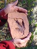 Grallator Dinosaur Footprint (Medium) Replica