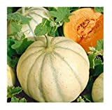 David's Garden Seeds Fruit Melon Charentais 7667 (Orange) 50 Non-GMO, Heirloom Seeds
