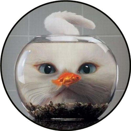 Cat Looking at Gold Fish in Bowl - Etched Vinyl Stained Glass Film, Static Cling Window Decal (Fish Glass Stained)