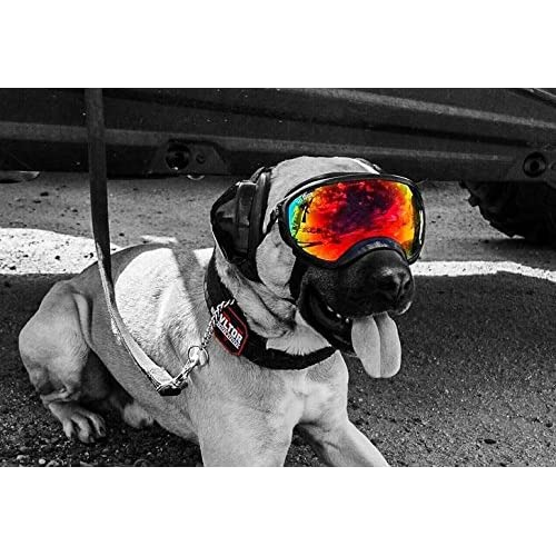 goggles cost  Rex Specs Dog Goggles Large Black Frame Smoke Lens UV400 ...