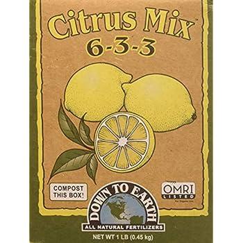 Amazon.com: 10 libras Mango, aguacate, Acerola, guavas ...