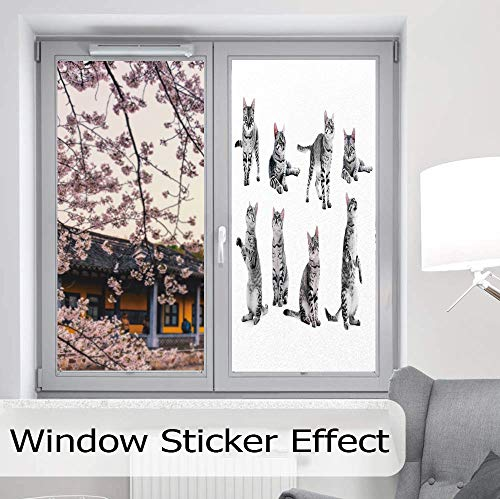 (YOLIYANA Privacy Frosted Decorative Vinyl Decal Window Film,Cat Lover Decor,for Bathroom, Kitchen, Home, Easy to Install,Collage of a Cute Inquisitive Striped Shorthair Furry,24''x48'')