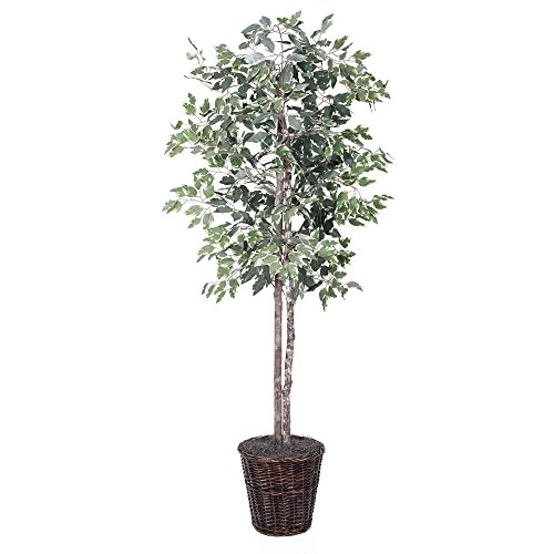 Vickerman 6-Feet Artificial Variegated Ficus Economy Tree in Decorative Container (Best Indoor Trees For Home)