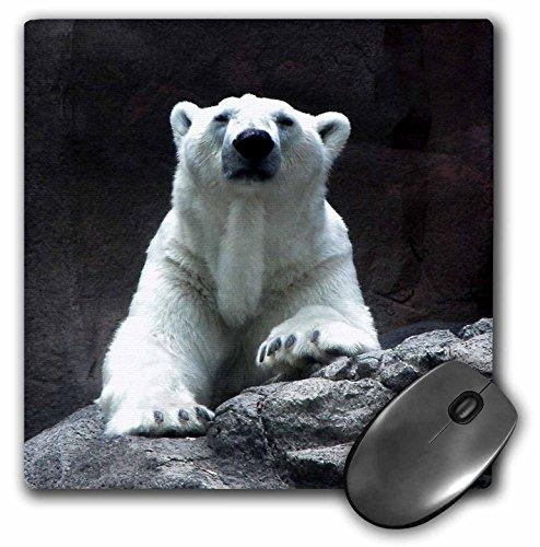 3dRose Beverly Turner Photography - Polar Bear Resting - MousePad ()