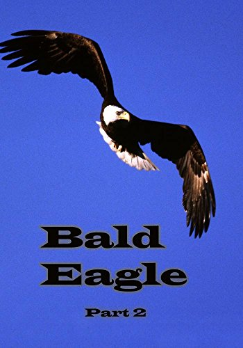 (Bald Eagle: Part 2)