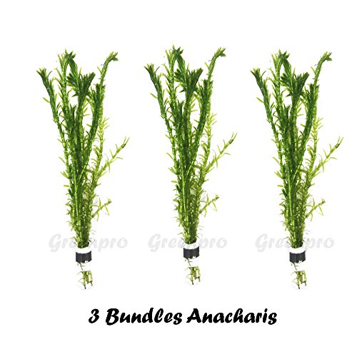 Greenpro 3 Bundles Anacharis Egeria Densa Elodea Live Aquarium Plants Freshwater Pond Aquatic Water Plant Decorations