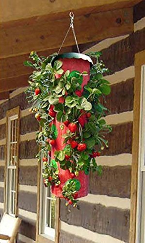 (Topsy Turvy Upside Down Strawberry Planter (4 Pack))