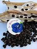 Blue pea flower Butterfly pea Flower 1000 seeds, 30 pcs thread