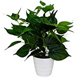 SunAngel Artificial Plants, Epipremnum Aureus Leaves Silk Grass Fake Plants Bridal Home Garden Office Floor Restaurant Wedding Decoration (small)