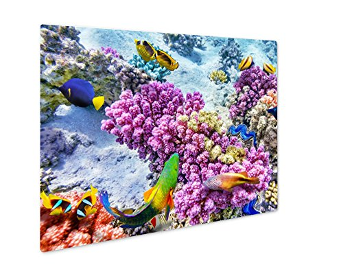 Ashley Giclee Metal Panel Print, Underwater World With Corals