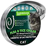 Best Flea Collars For Kittens - LORDDDON Flea and Tick Collar for Cats Review