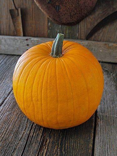 400 Seeds: Connecticut Field Pumpkin 100-1600 Seeds Heirloom Bulk Non-GMO Bright Orange