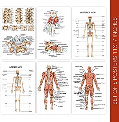 Human Body Anatomy Posters Set Of Six 11x17 Medical Science Chart Art Posters These Educational Skeleton Model Prints Come With Sticky Squares For Installation Wall Poster Decor For Classrooms