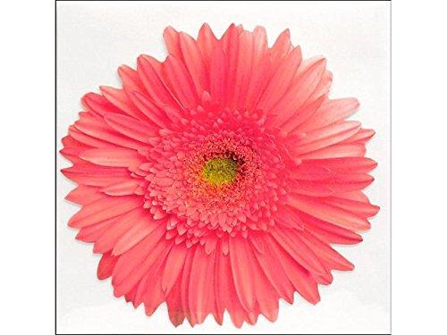 Pink Gerbera Daisy - Paper House Productions Die Cut Blank (Daisy Gerbera Centerpiece)
