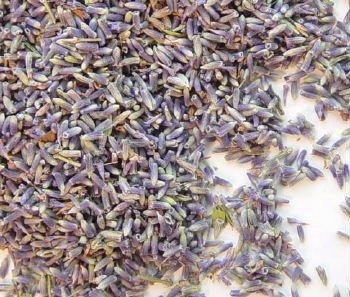 Lavender Flower Buds #1 - Uses - Culinary & Crafting - 4oz Bag